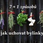 jak uchovat bylinky